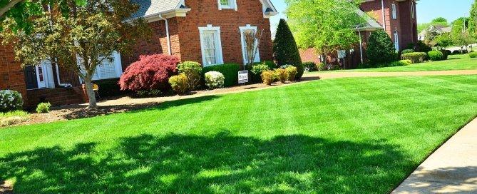 sianie trawnika