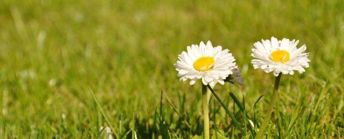 chwasty w trawie